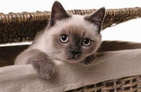 dlaczego warto mieć kota