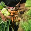 przydomowy warzywniak